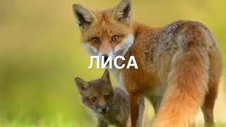 Животные | фото животных видео для детей