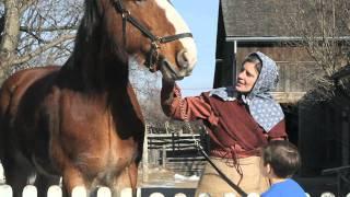 Farm Animals - Black Creek Pioneer Village