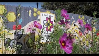 Beekeeping in Detroit: An Inside Look at Detroit Hives