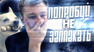 ДО СЛЕЗ | TRY NOT TO CRY CHALLENGE