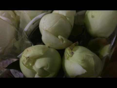 Купить пионы Paeonia Lactiflora Grp 'Duchesse de Nemours' в Минске