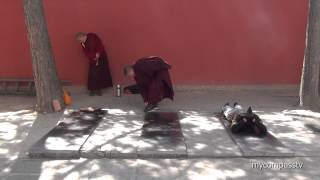Tibetan Buddhist Prostration - Wǔtái China