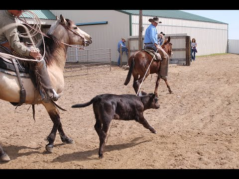 Peaches the Mule - Calf Roping - SOLD at Auction $13k