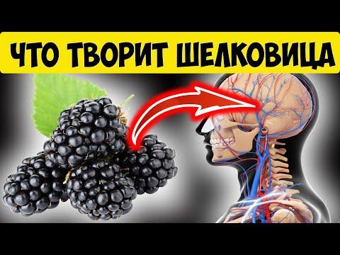 Корень тутовника шелковицы польза и противопоказания