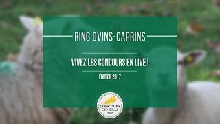 Direct - Ring ovins/caprins | Lundi 27 février