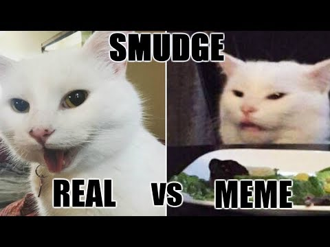 Woman Yelling At Confused Cat Explained Smudge The Cat Youtube