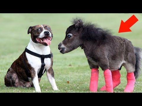 5 Most Unusual Horse Breeds in The World