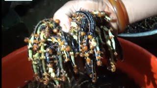 RÙNG MÌNH XEM VỢ CHỒNG ĐỜI SỐNG TÂY BẮC CHẾ BIẾN MÓN SÂU RỪNG KINH DỊ (eat monsters forest Vietnam)