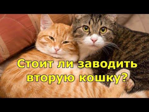 Вопрос: Нужно ли заводить кота(кошку) в квартире (см.)?