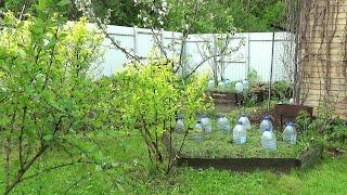 Дачный обзор / Мой огород. Правильные грядки для бахчи. Посадка тыквы и кабачков под бутыли