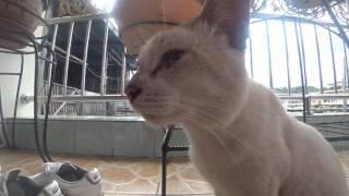깜봉 아에르 고양이 소니 액션캠 FDR-X3000