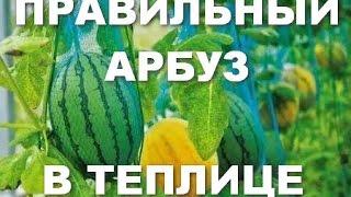 Как вырастить арбузы в теплице технология от А до Я