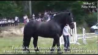 Repeat youtube video Festivalul National Ecvestru RASNOV-2013-Caii lui POP SORIN (SORICELU)-BAIA MARE