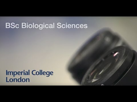 Biological Sciences BSc - Imperial College London