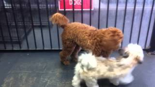 Dog Grooming Brisbane Dog Daycare Dog Training Pet Motel 830 Logan Road Holand Park4121