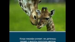 Интересные факты о животных 2/Interesting facts about animals 2