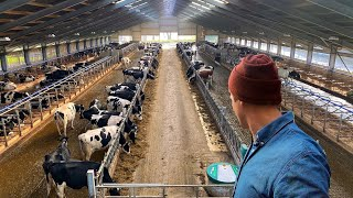 IS THIS THE FUTURE OF DAIRY FARMING?