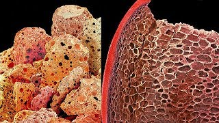Electron Microscope Images Of Food, Pictures, Photos, Atom, Human Body, Viruses, Photography(Part-2)