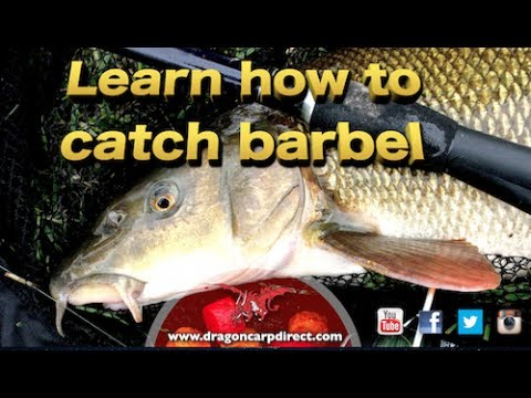 Barbel fishing tips, tactics and tackle on the River Wye
