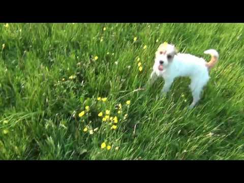 Puppy Dog Hotel Holidays Ellie, Mia, Max, Dudley and Lola