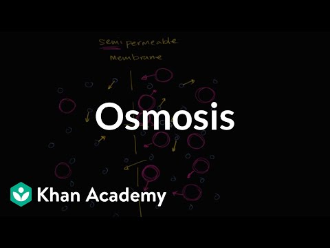 Osmosis  Membranes and transport  Biology  Khan Academy