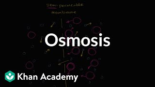 Osmosis | Membranes and transport | Biology | Khan Academy thumbnail