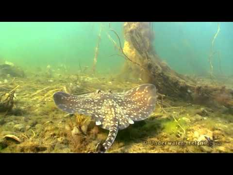 Full HD 50Mbps Underwater stock footage from Mulroy Bay & Broad Water in Donegal Ireland