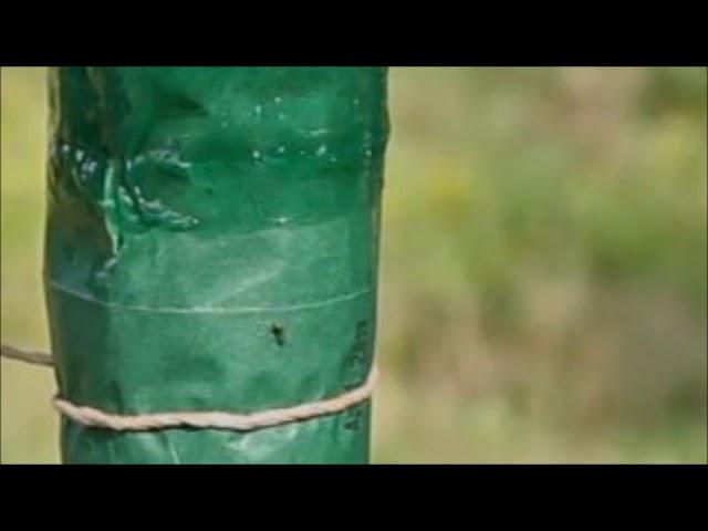 Videobeweis nicht nur im Fußball: Raupenleim gegen Ameise