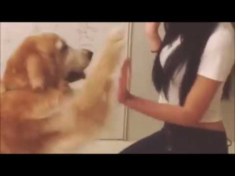 A girl and her dog 2  ( Wonderful  thumbnail and free intro templates )