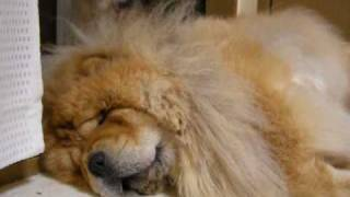チャウチャウ犬とポメラニアンのURL http://chowpome.blog105.fc2.com/ ...
