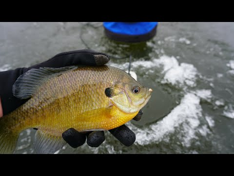 Early Wisconsin Ice Fishing 2018 (First Ice Bluegills And Bass)