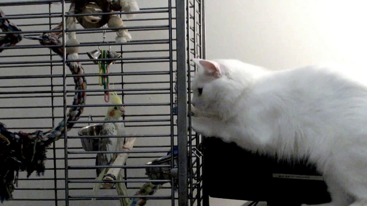 ассортимент картинка корелла кошка рада