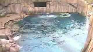 Deer vs. Polar Bear at the Pittsburgh Zoo