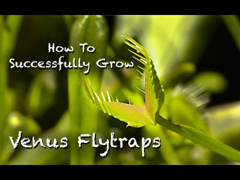 Download How To Successfull Grow Venus Flytraps