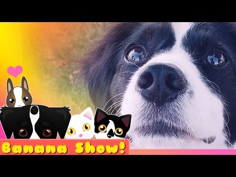 TOO CUTE 4 YOU ❤ | Banana the Talking Dog Show Ep: 16