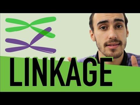 Genética - Linkage e Crossing-over