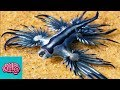 10 Animals You Won't  Believe Exist