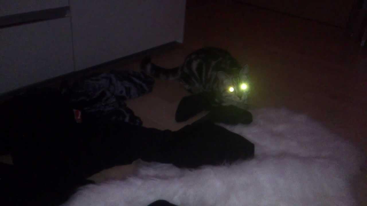 Кот включил свет