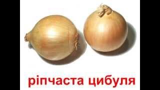 Презентация для детей по Доману на украинском языке. Овочі / Овощи 2