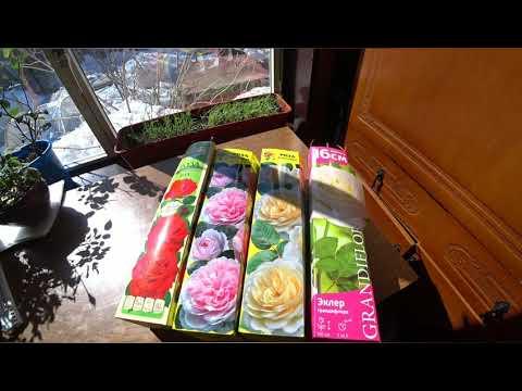 Розы из коробки,