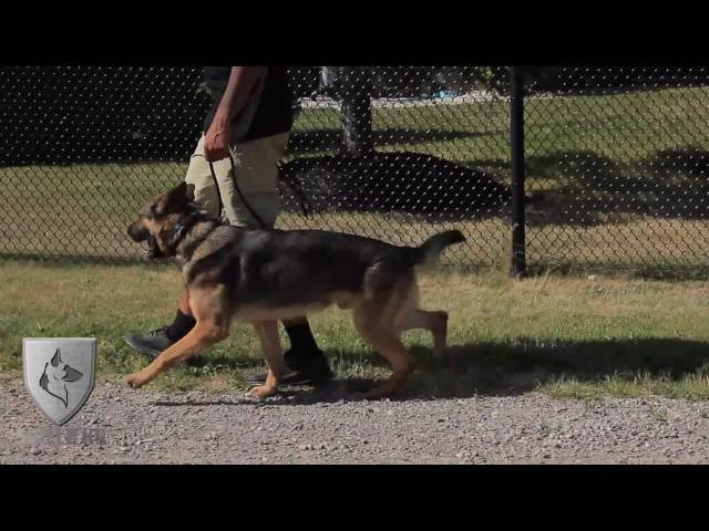 Protection K9 Argo - For Sale