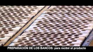 Repeat youtube video TRAPICHE LA ESPERANZA