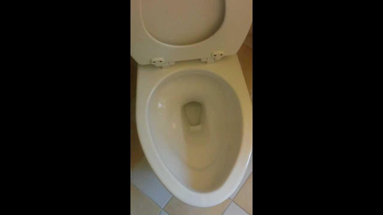toto drake cst744s gmax flushing paper
