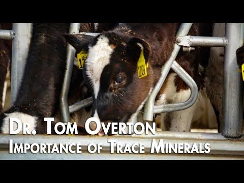 The Importance of Trace Minerals For Dairy Cows - Dr. Tom Overton