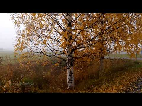 Nokia Lumia 1020 Full HD video (foggy)