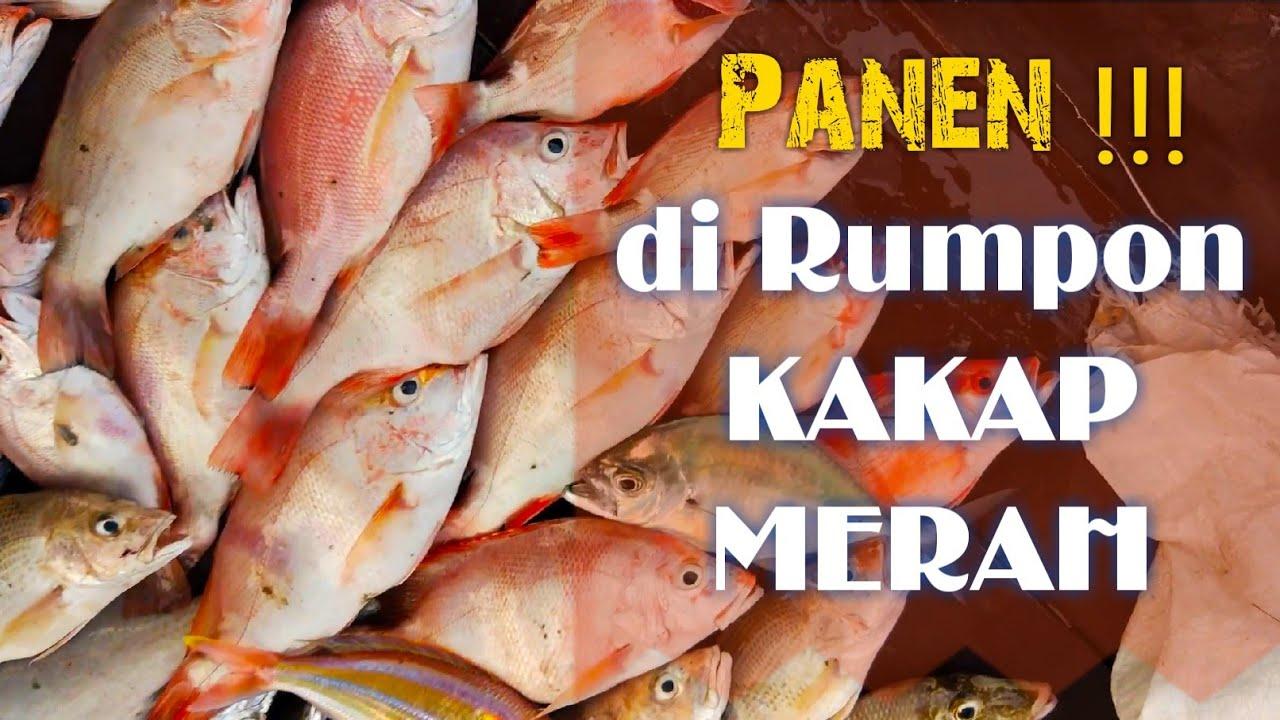 NGOMSET!!! Mancing Ikan Kakap Merah di Rumpon | Pulau ...