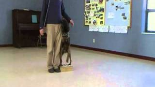 Dog Training - Competition Heeling, Episode 2