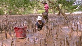 Sông nước - miệt vườn: Mưu sinh dưới tán rừng bần