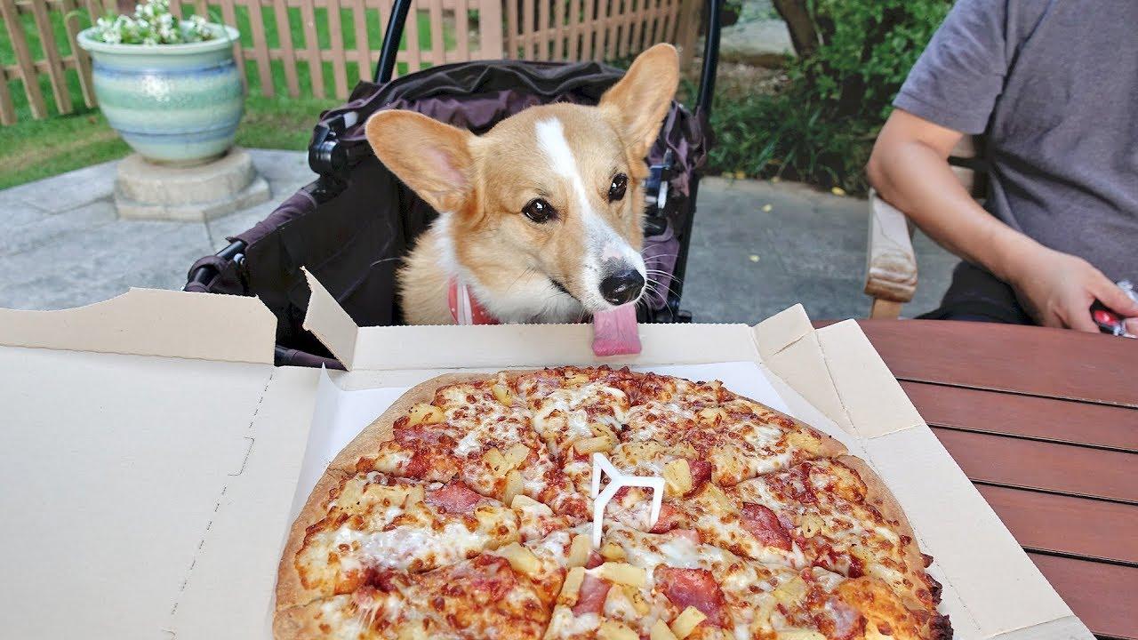 Resultado de imagen para corgi eating with owner