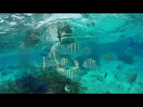 Stingray City Trip - 01 January 2017